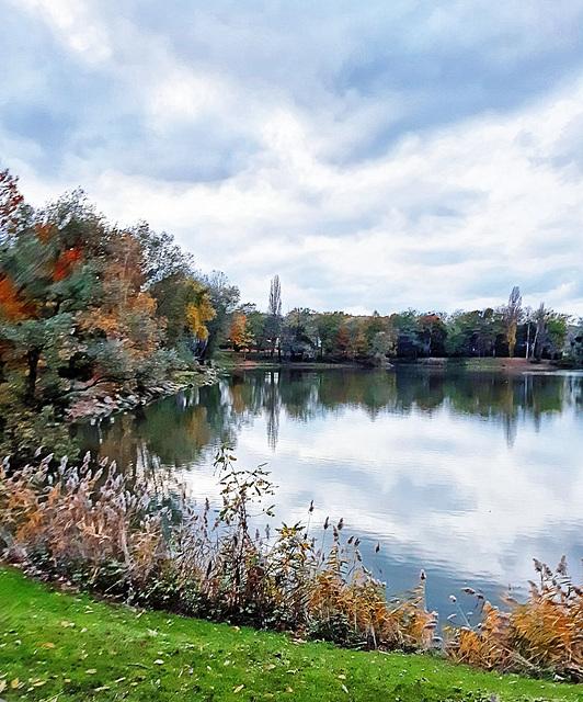 fall around the pond