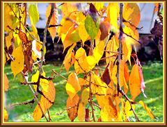 The Glory of Autumn.