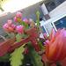 Floroj en mia balkono