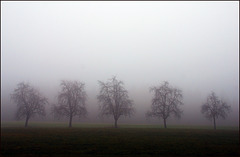Fünf  Bäume sollt ihr sein:)