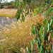 Autumn grasses at the wetlands