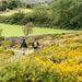 Wandern im Dartmoor - 20150831