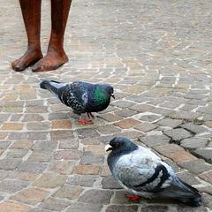Un petit pigeon peut apporter de grandes nouvelles. [Proverbe chinois]