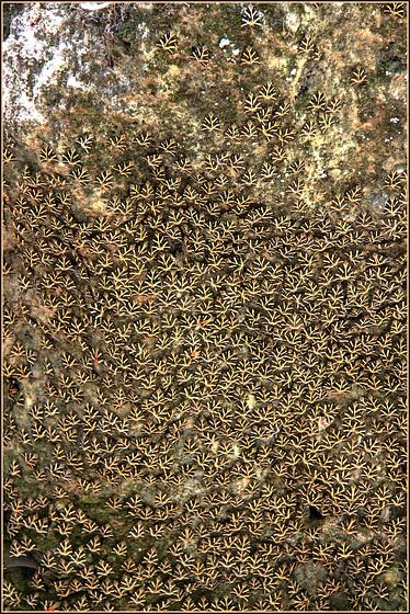 Butterflies Valley Park - RODI - (596)