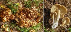 ID? Growing in a dense clump in the same spot as last year...