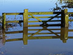 Happy floating fence Friday