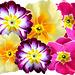 Blüten...  ©UdoSm