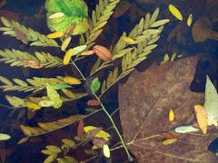 automne au bassin de B.C.
