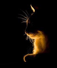 Shaman sous la lampe !