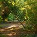 Sunlit Hidden Path