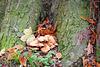 Paddestoelenboom