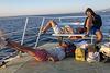 L1300837 Chios-Smyrni route