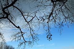 un ciel de novembre