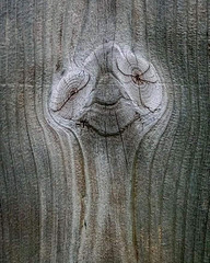 par - another knotty face
