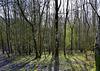 Winter woods contre-jour.