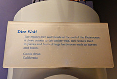 186 Dire Wolf Story
