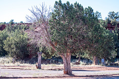 New Mexico landscape.61jpg