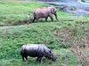 Petit matin dans le Térai (Sauhara, Royal Chitwan National Park, Népal)