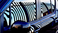 Zebra Car: Reflected Fence 1