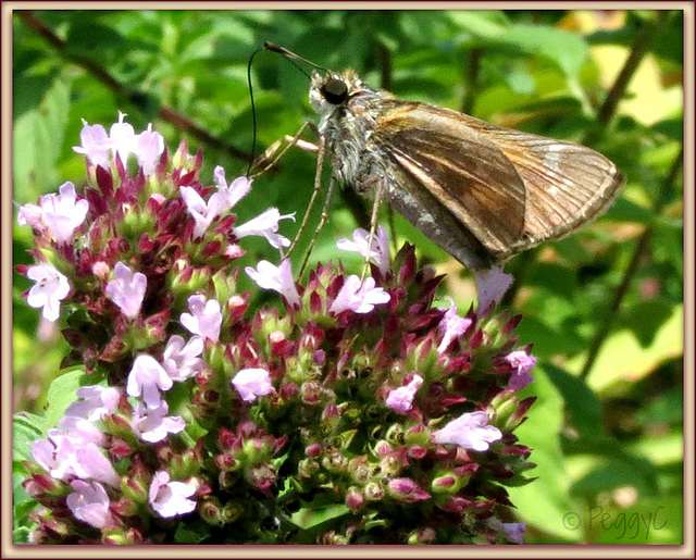 Flower-Skipping..