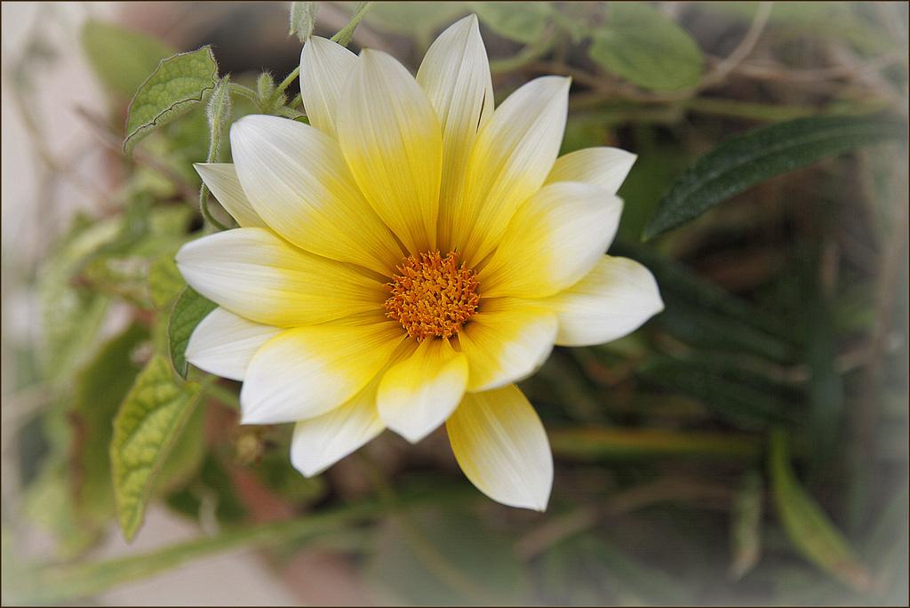 Une fleur par jour.... - Page 5 41496944.0e4d3b06.1024