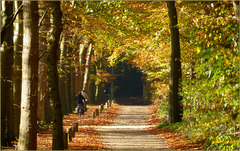 Autumn in the Netherlands...