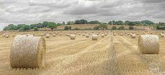 Cawder Hall Farm   /  Aug 2018