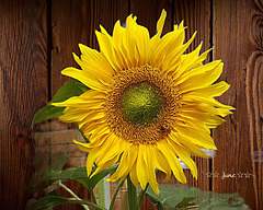 Hello sunshine....