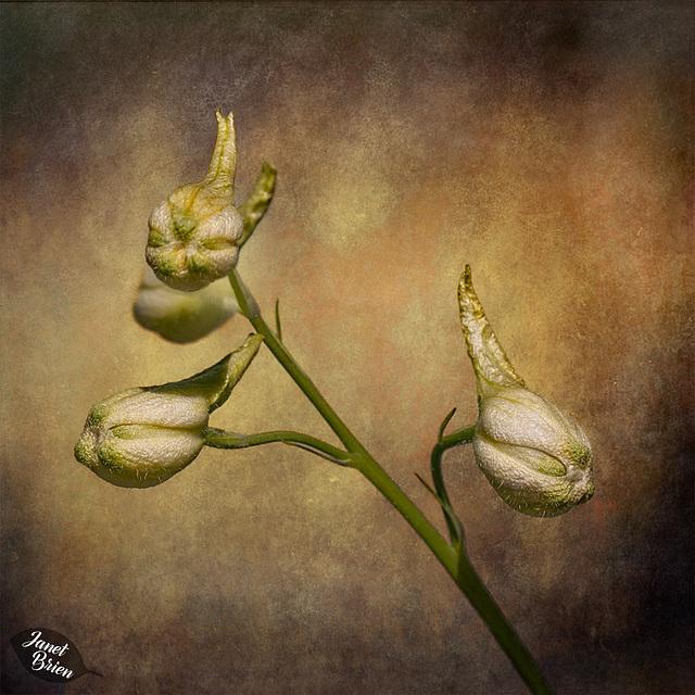 209/366: Aliens or Flower Buds?