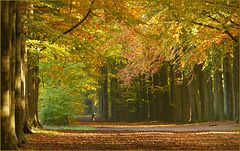 Cycling in the Autumn Wood...