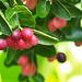 Caranda Fruits