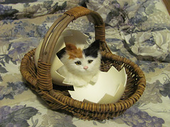 Newly Hatched Kitten