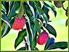 Tree Strawberries