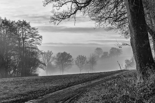 A Misty December Morning (180°)