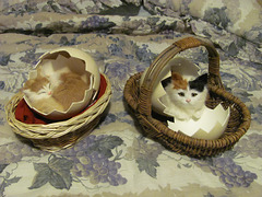 Newly Hatched Kittens