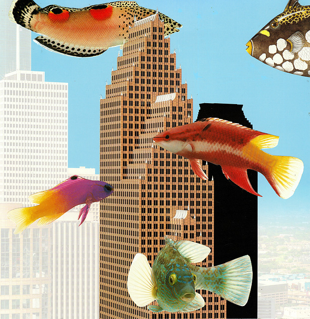 fish in the city