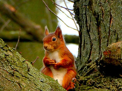 Begging for nuts...