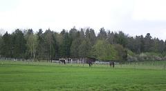 Pferdekoppel [HFF]