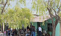 Café and trees