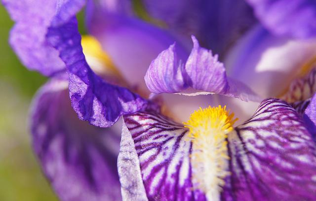 ... intimité Iris ....