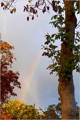 Rainbow in my street... 2