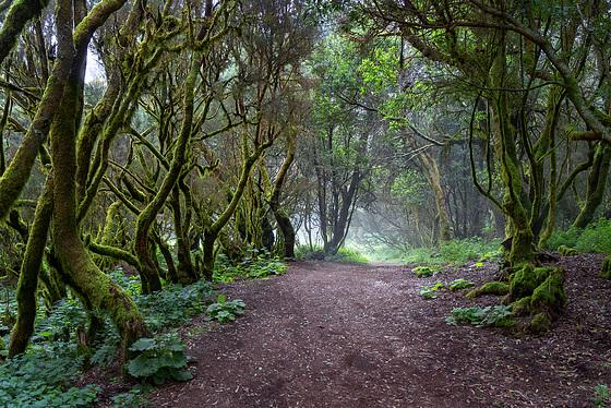 Laurel Forest - 3