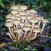 Waggoner's Wells Fungi