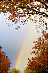 Rainbow in my street... 1