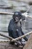 RIP, Tikala! :'-( (Zoo Frankfurt)
