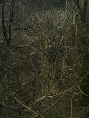 back into the woods again...