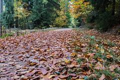Herbstlaub Bleidenstadter Wald