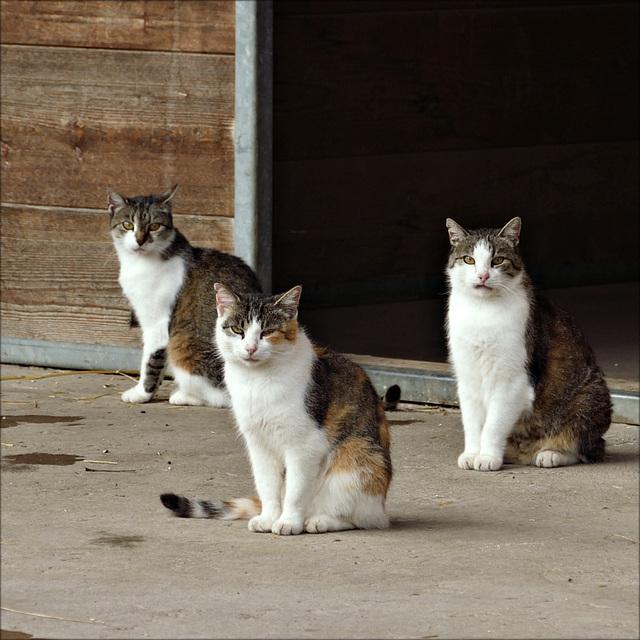 Drei von uns
