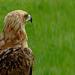 Eagle Eyed III