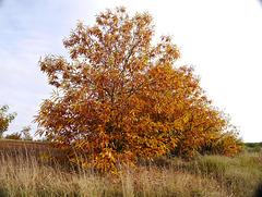 Outono II